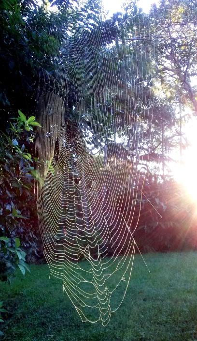 web 002