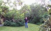 My sister's backyard London